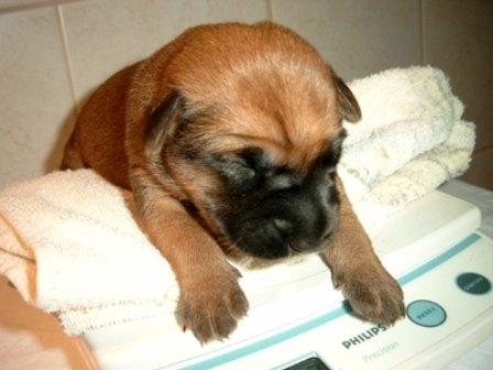 ginastica para cães pequenos